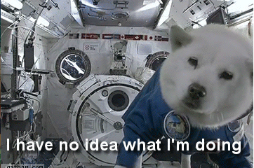 i-have-no-idea-what-im-doing-space-dog-gif